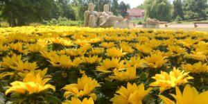 Sonnenblumen für Rostock